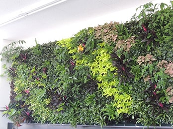 屋内壁面緑化とは?