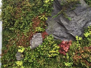 壁面緑化とは?