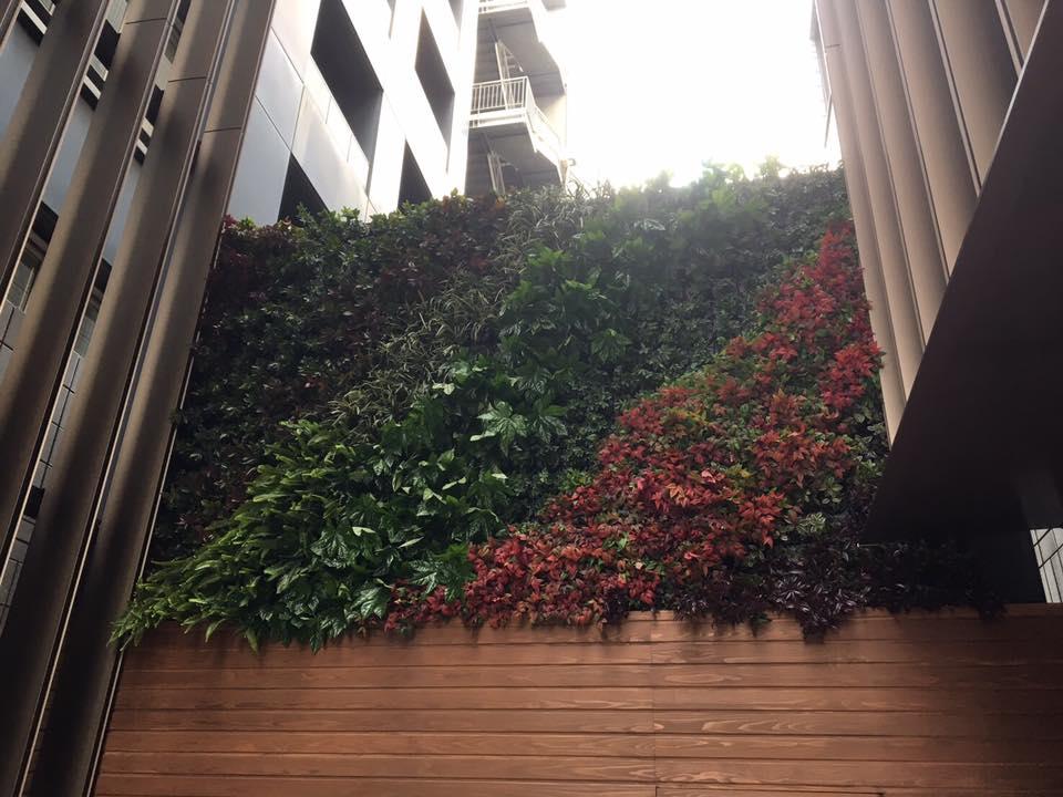 屋外壁面緑化