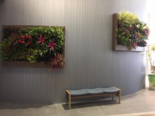 屋内壁面緑化プラティコ